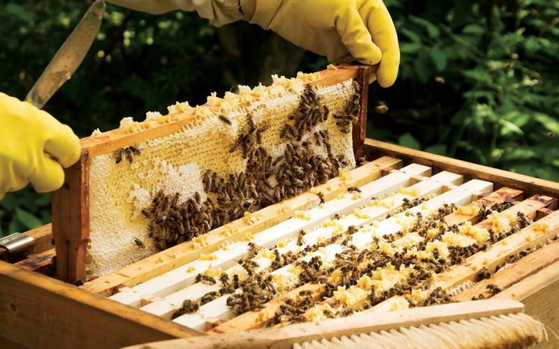 del0117_beekeeper-800x500